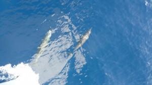 Delfine begleiten unser Boot